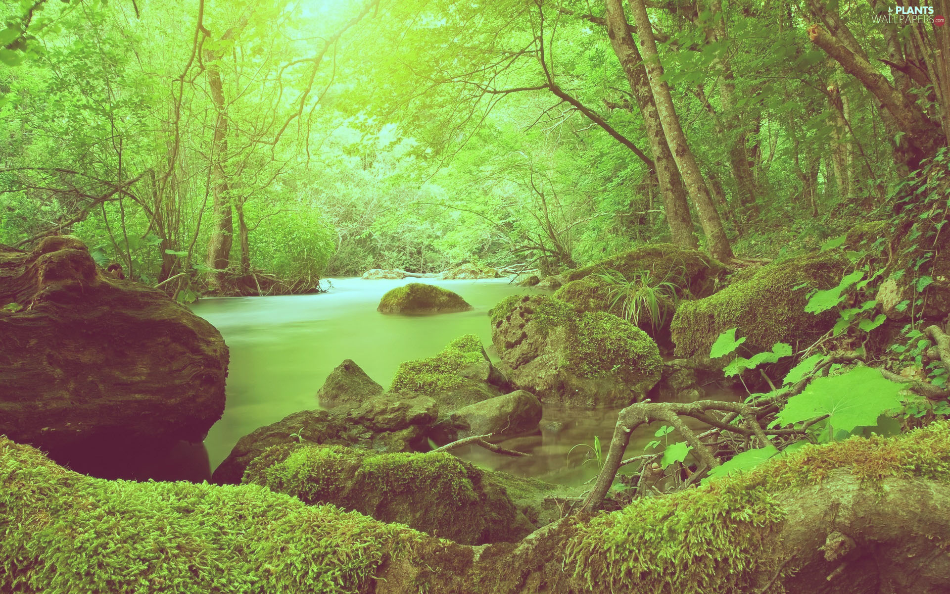 moss-green-stones-river-viewes-trees